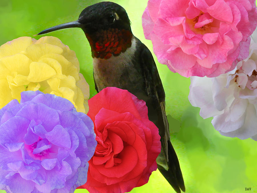 Hummingbird Flower Mixed Media - Hummingbird Flower by Debra     Vatalaro