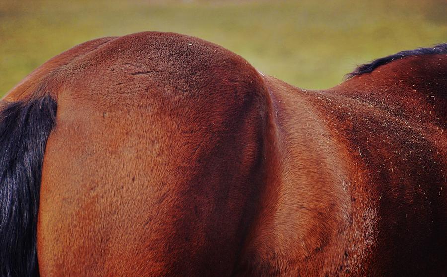 Horse Photograph - Hunter Bay by JAMART Photography