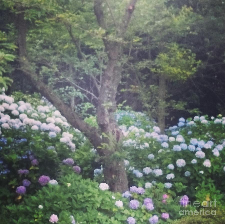 Blue Photograph - Hydrangea Flowers  by Sobajan Tellfortunes