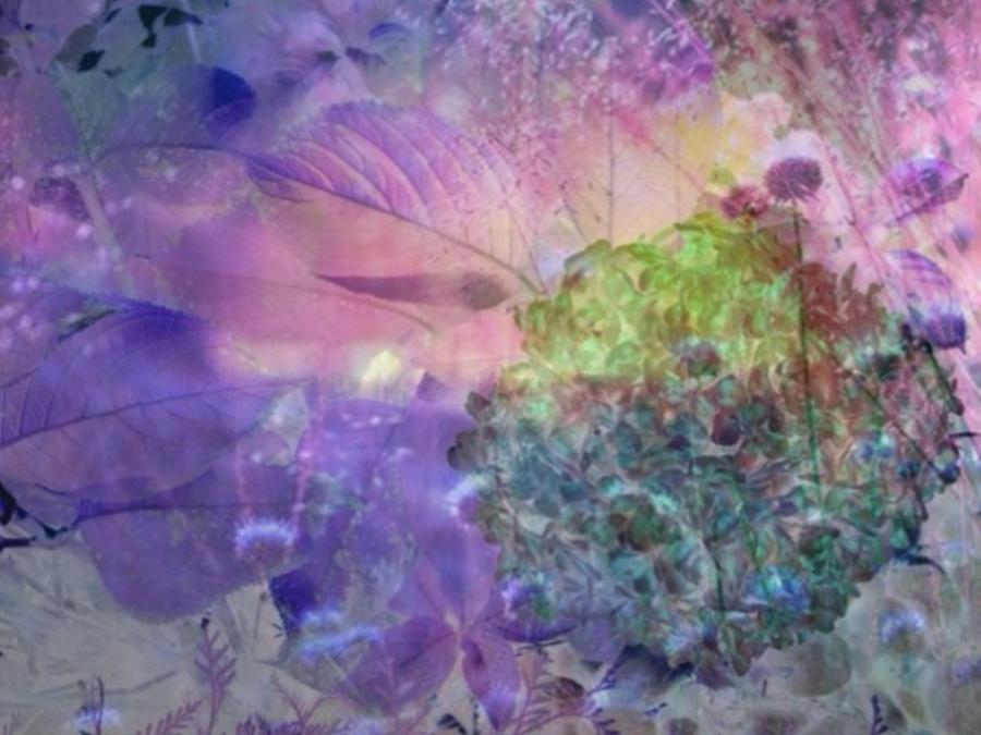 Purples Photograph - Hydrangea by Rita Koivunen