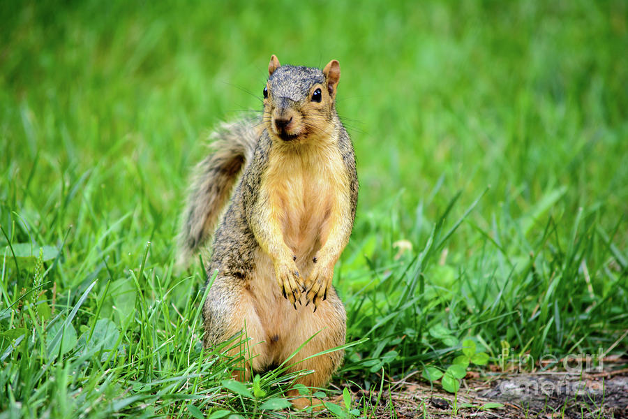 Squirrel Photograph - I See You by Gaby Swanson