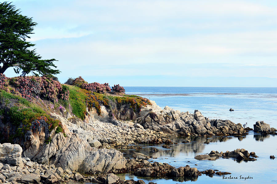 Ice Plant Along The Monterey Shore 2 Photograph
