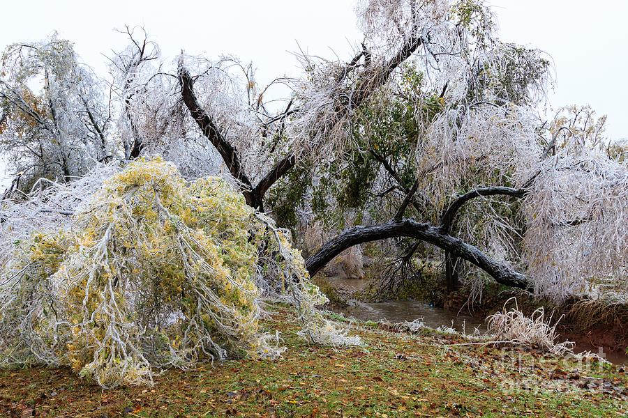 Ice Storm Photograph