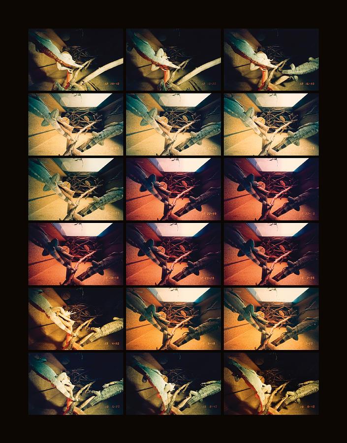 Sleep Photograph - Iguana by Ted Spagna