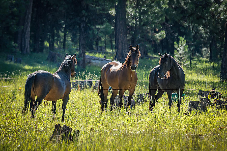 Horses Photograph - Im Free-are You by Joe Hudspeth