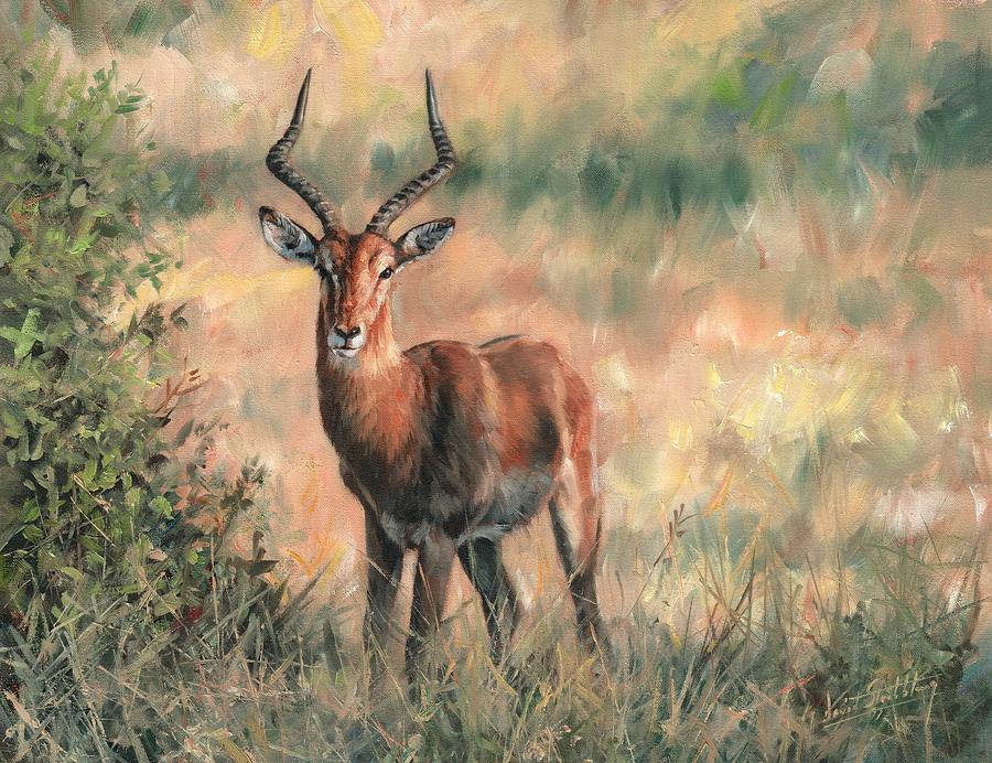 Impala Painting - Impala by David Stribbling