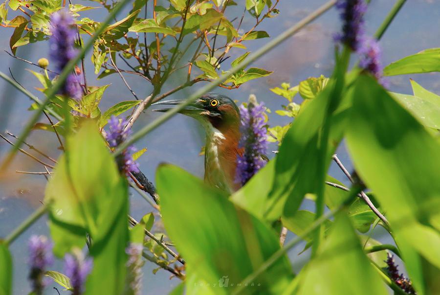 In Hiding Photograph by Tony Umana