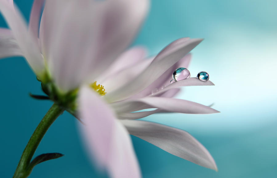Flower Photograph - In Turquoise Company by Heidi Westum