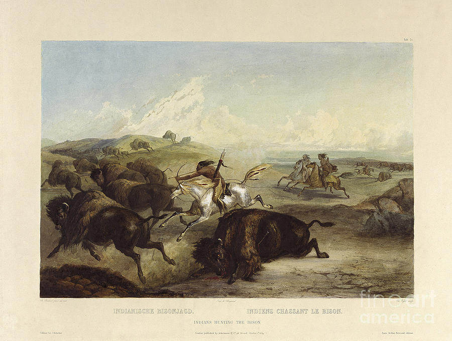 Indians Hunting The Bison Painting by Celestial Images