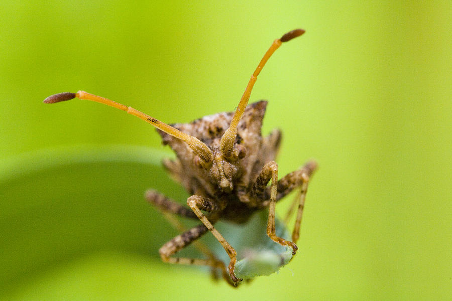 Insect Photograph by Andre Goncalves