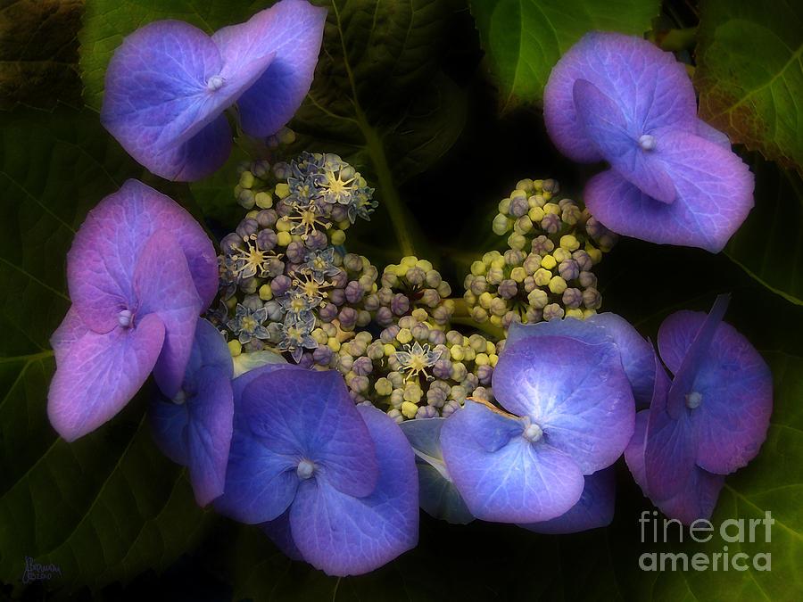 Flower Photograph - Iridescent Blue by Jeff Breiman
