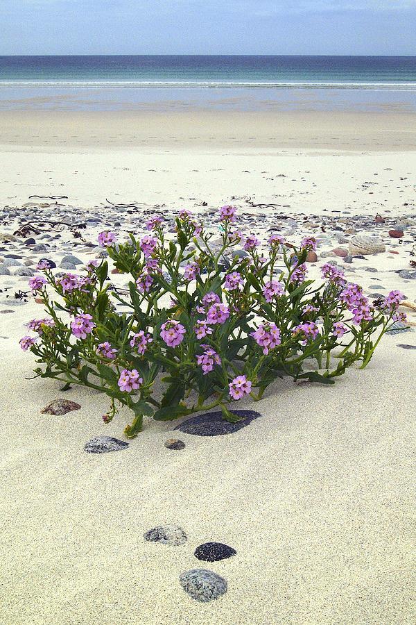 Isle of Vatersay Bagh Siar by John McKinlay
