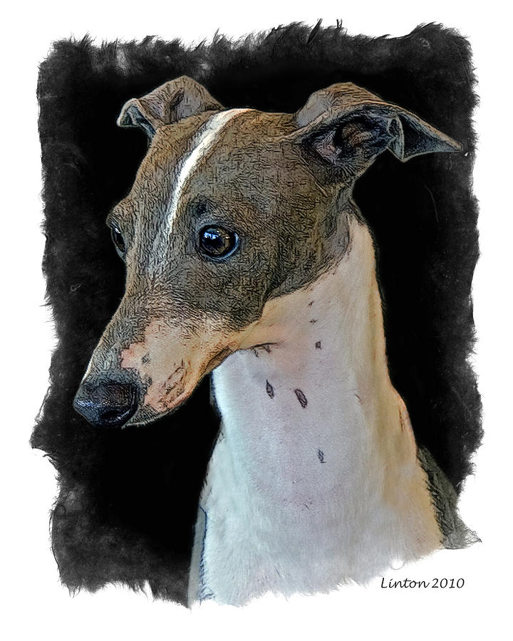 Italian Greyhound Digital Art - Italian Greyhound by Larry Linton