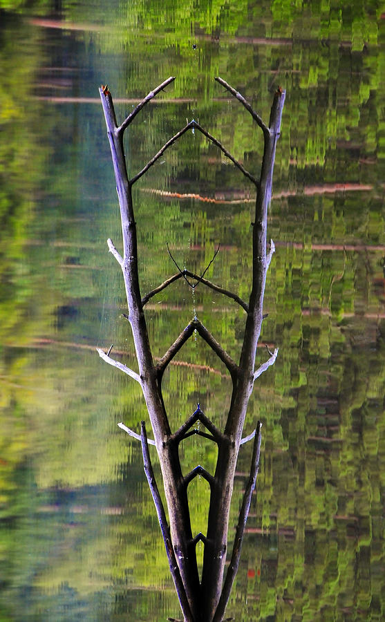 Tree Photograph - Jacobs Ladder by Skip Hunt