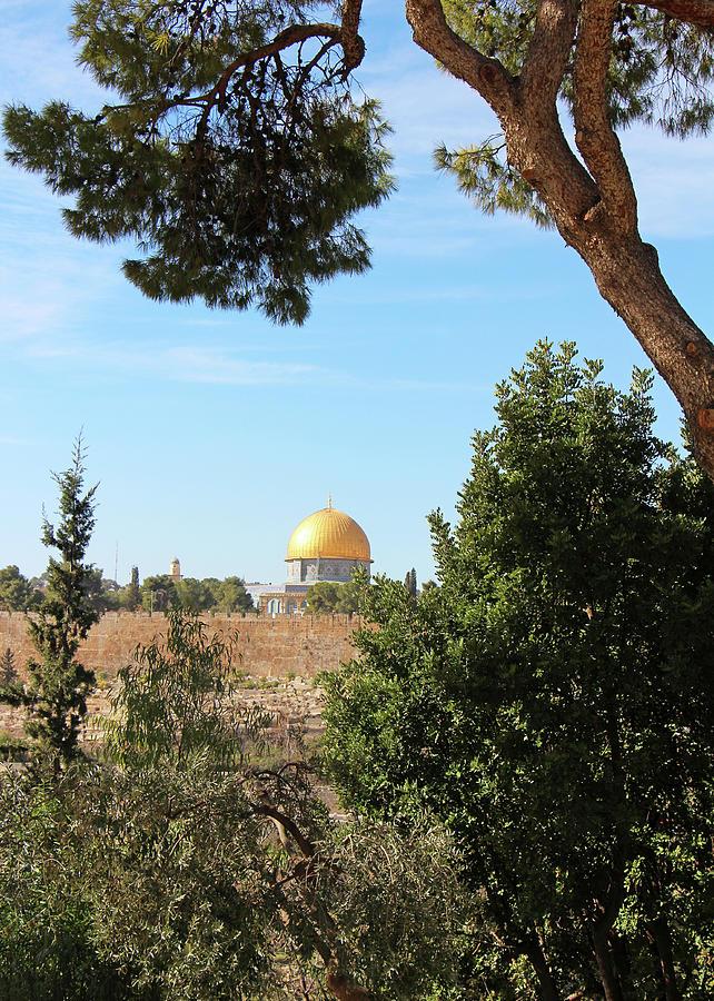 Jerusalem Photograph - Jerusalem Trees by Munir Alawi