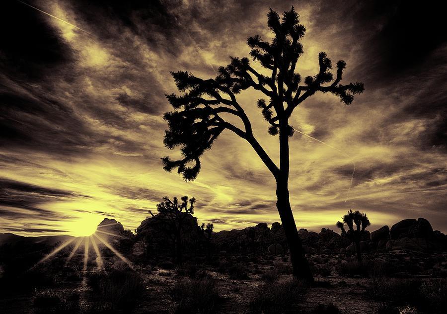 Joshua Tree by Geoff Coleman