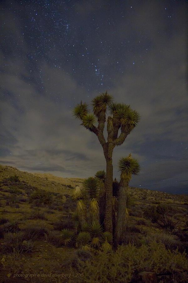 Joshua Tree Night Sky 1