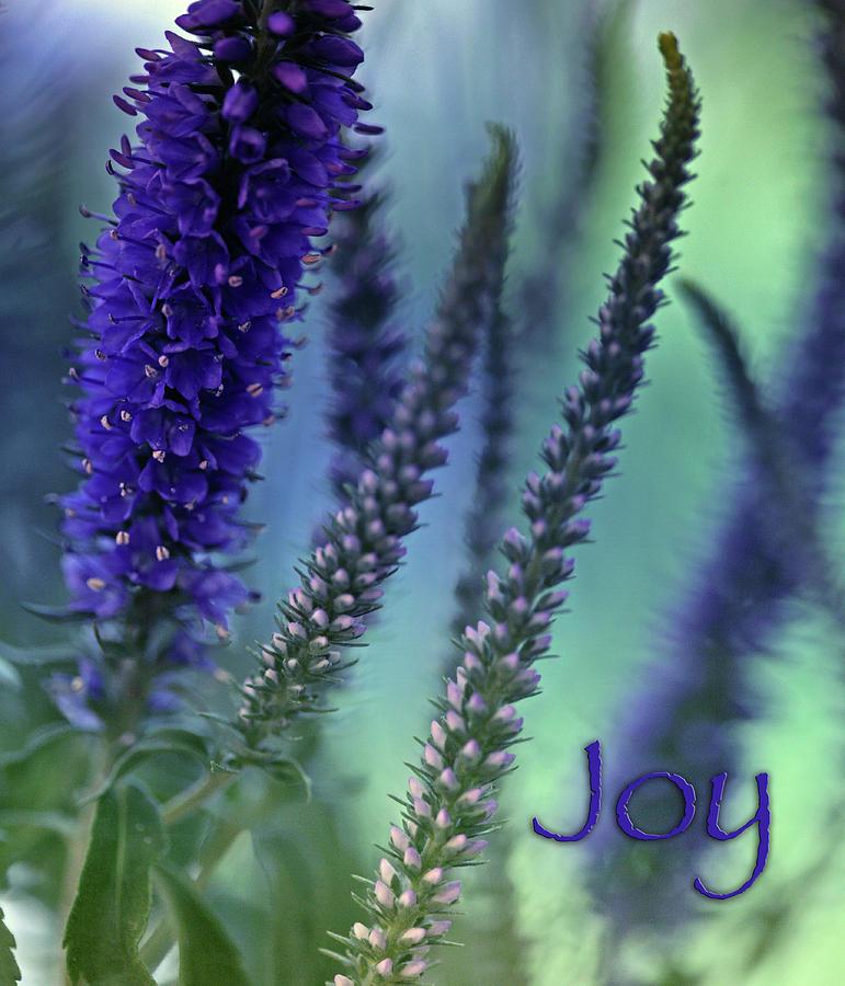 Wildflowers Photograph - Joy by Bonnie Bruno