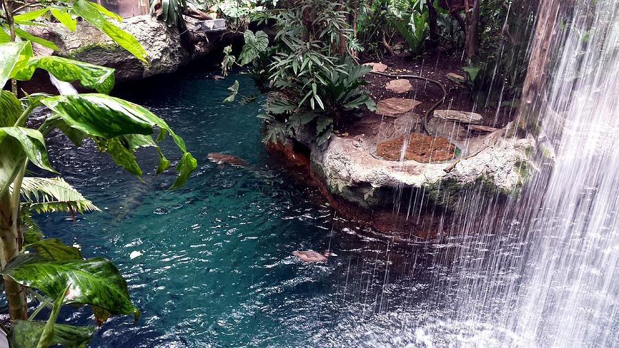 Jungle Waterfall by Kenny Glover