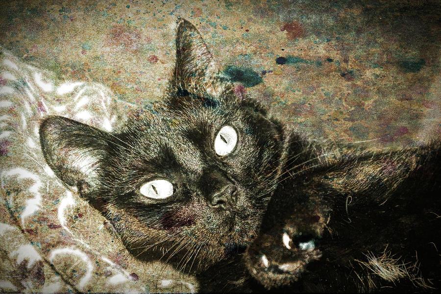 Cat Photograph - Junior by David Yocum
