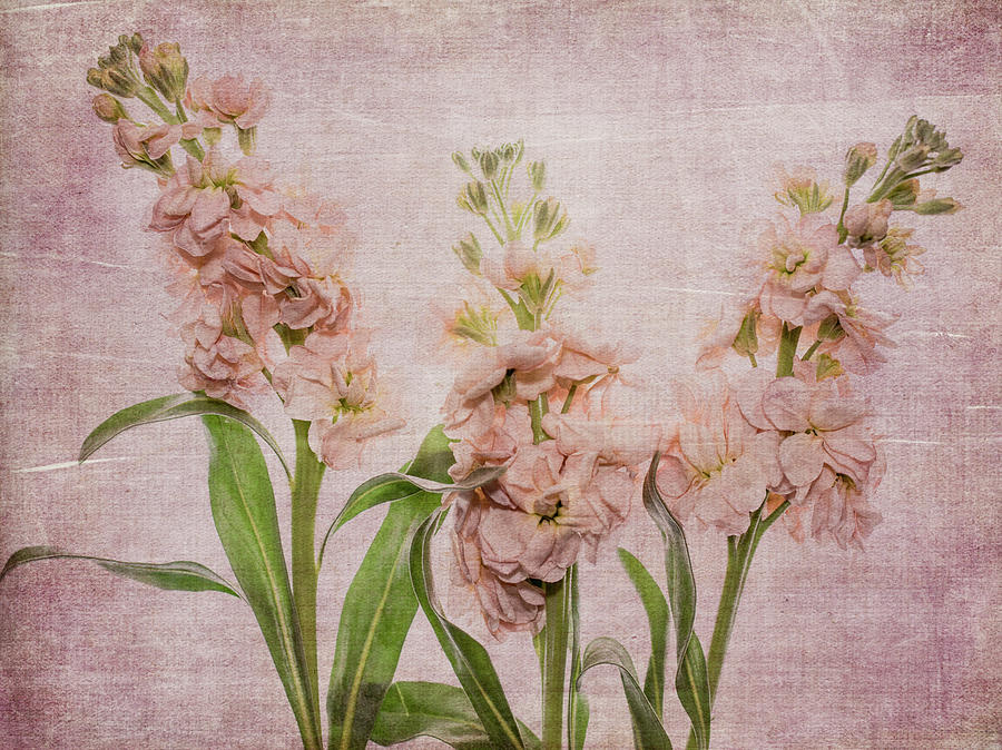 Flowers Photograph - Just Peachy by Rebecca Cozart
