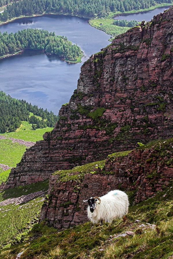 Sheep Photograph - Kerry Mountain Sheep Ireland by Pierre Leclerc Photography