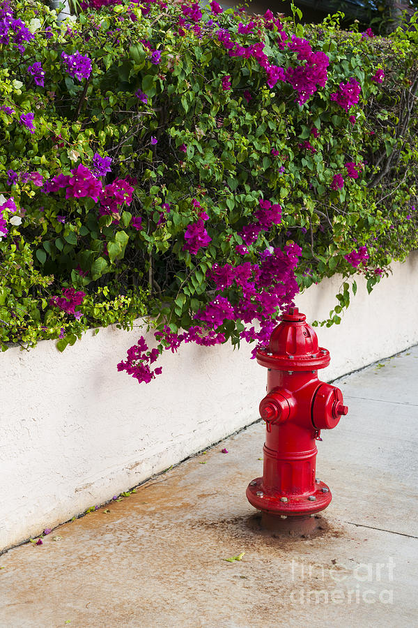 Fire Hydrant Photograph - Key West Fire Hydrant by Elena Elisseeva