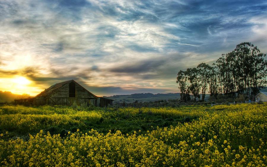 Landscape Digital Art - Landscape by Dorothy Binder