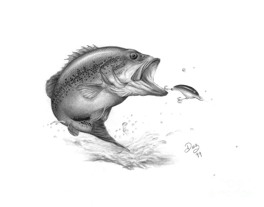 Large Mouth Bass Drawing By Larry Dez Dismang