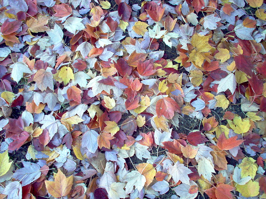 Leaves Photograph - Leaf Fall by Susan Boyes