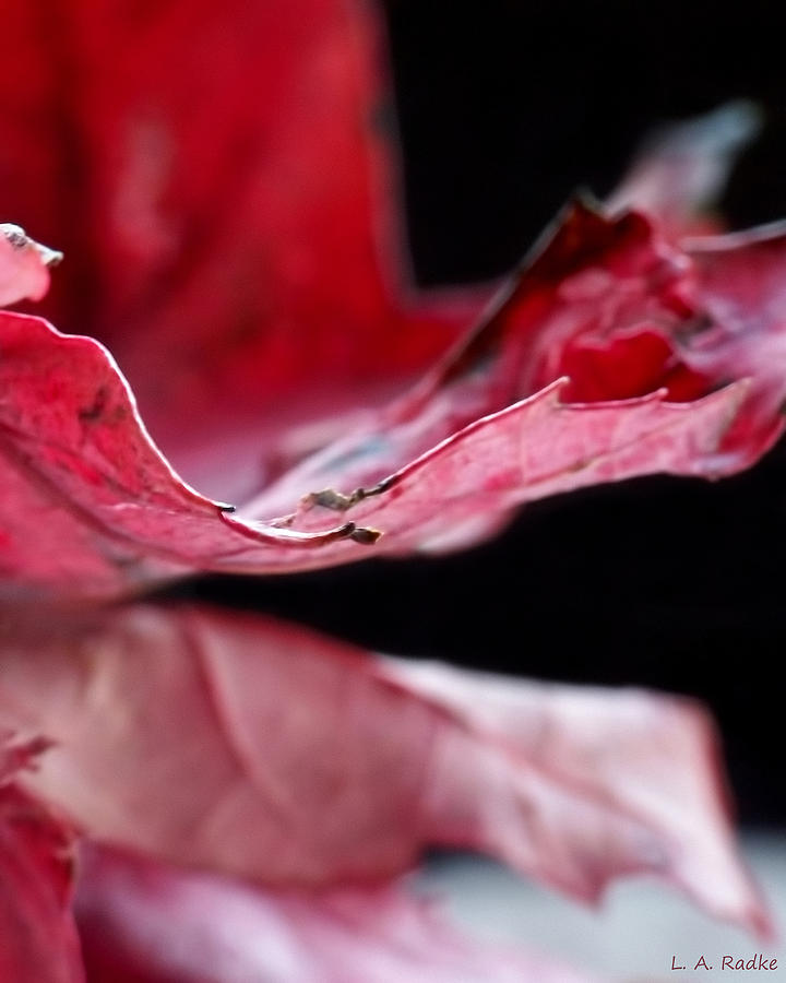 Abstract Photograph - Leaf Study V by Lauren Radke