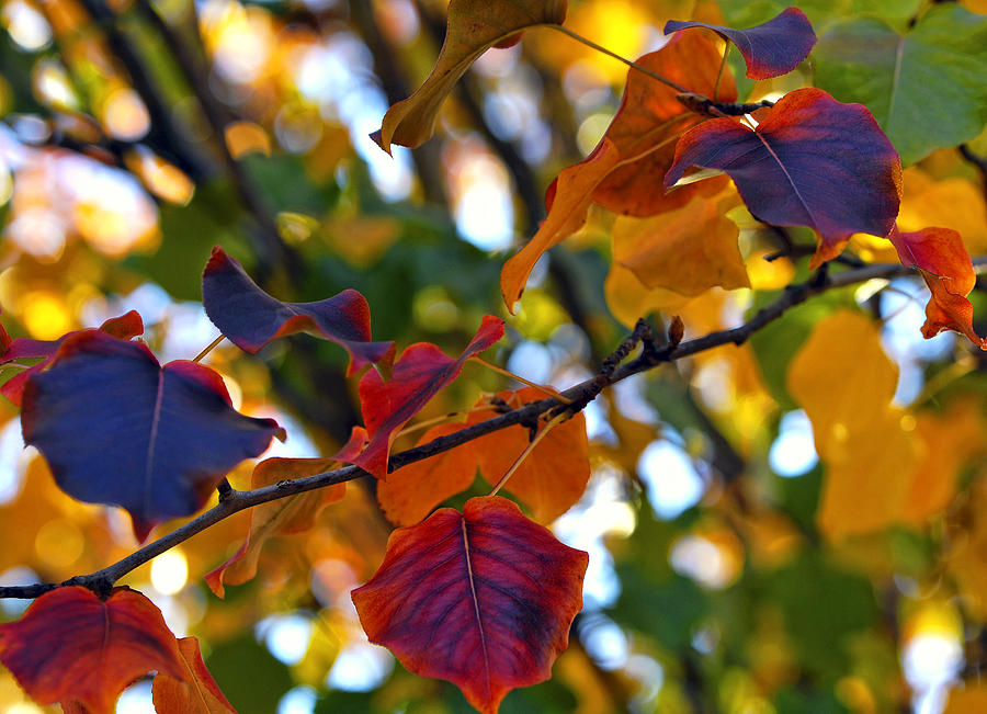 Leaf Photograph - Leaves Of Autumn by Stephen Anderson