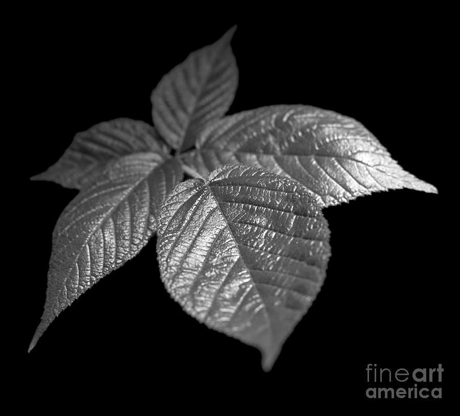 Plant Photograph - Leaves by Tony Cordoza