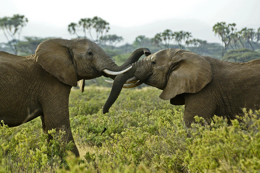 Africa Photograph - Lets Get Acquainted by Michele Burgess
