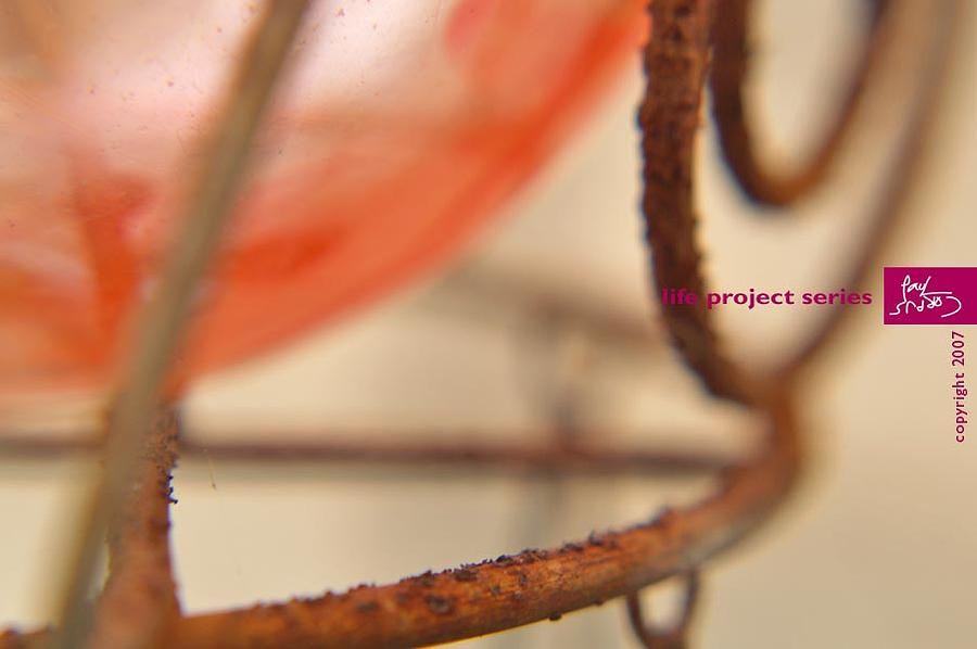 Details Photograph - Life Project Series by Paul Corpus