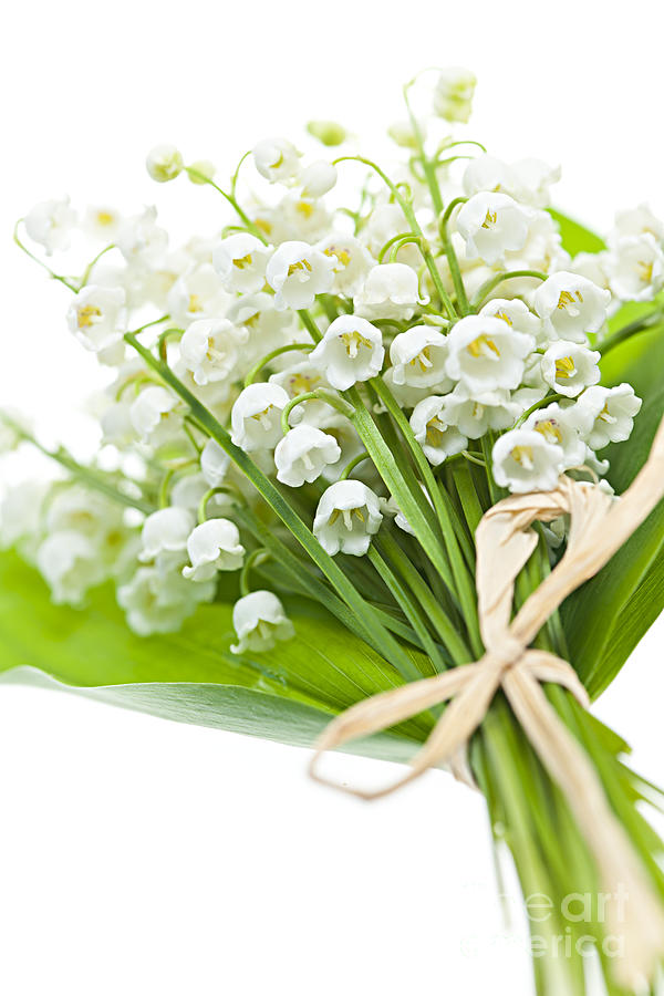 Flower Photograph - Lily-of-the-valley Bouquet by Elena Elisseeva
