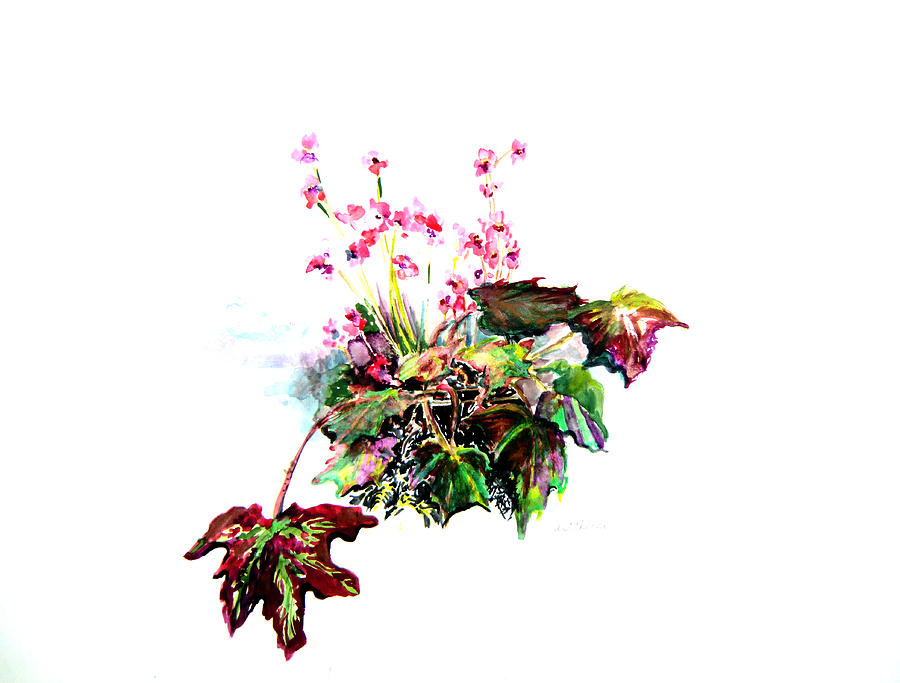 Botanical Painting - Linda Begonia by Mindy Newman