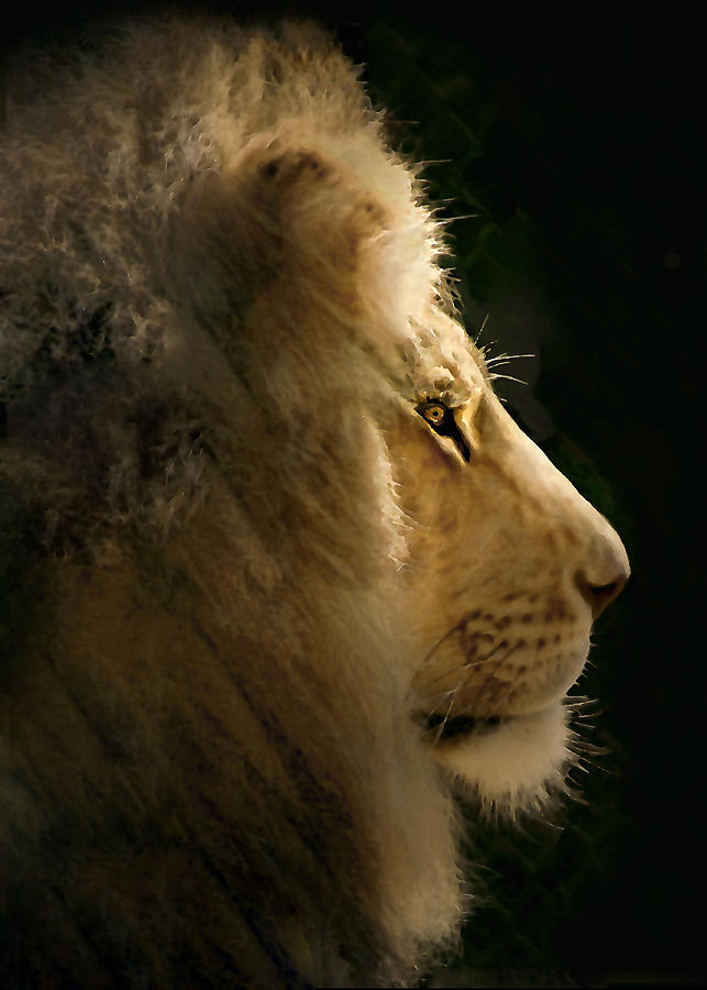 Lion Photograph - Lion Of Judah II by Sharon Foster