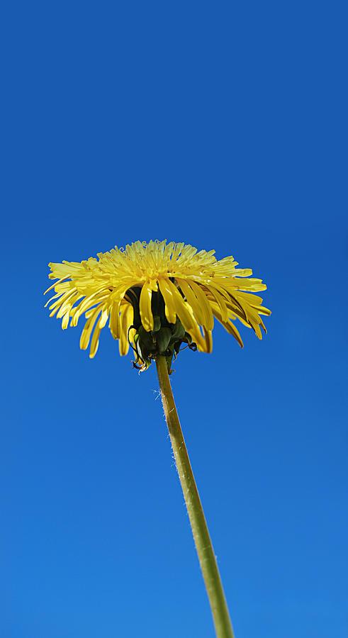 Little Piece of Sunshine by Marilynne Bull