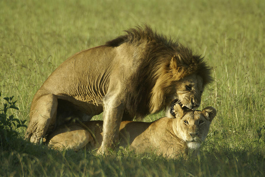 Africa Photograph - Love Bite by Michele Burgess