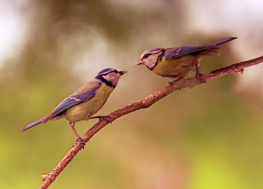 Tit Photograph - Lunch Time by Jaroslaw Blaminsky