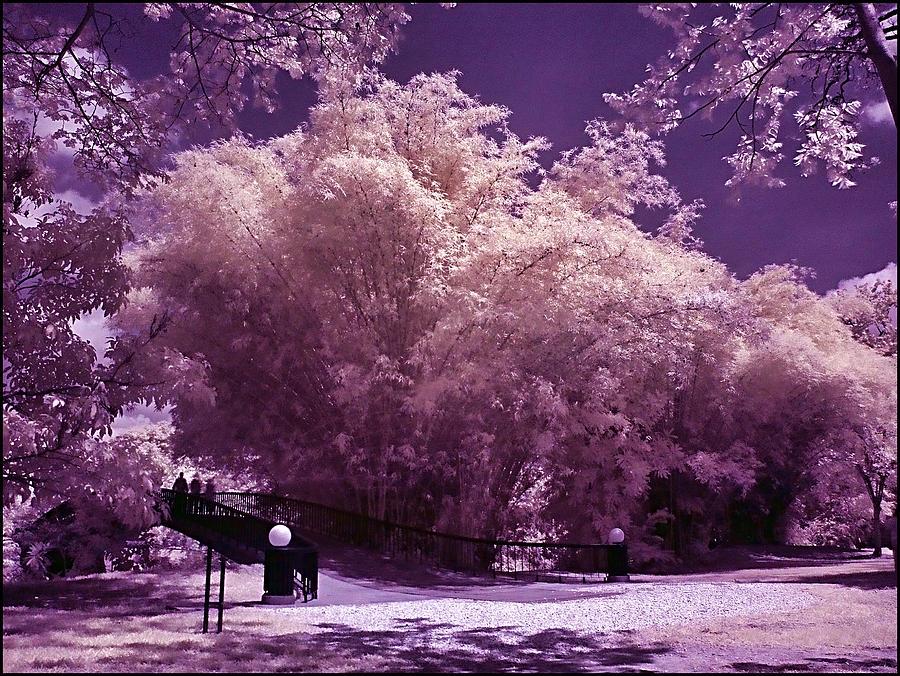 Landscape Photograph - Magic Garden  by Galeria Trompiz