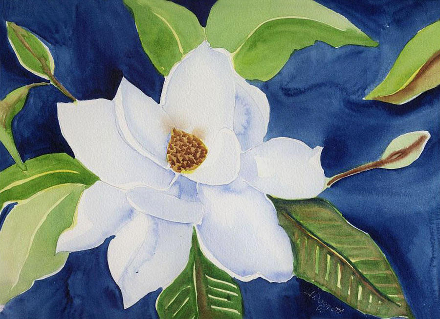 Magnolia Painting - Magnolia by Janet Doggett