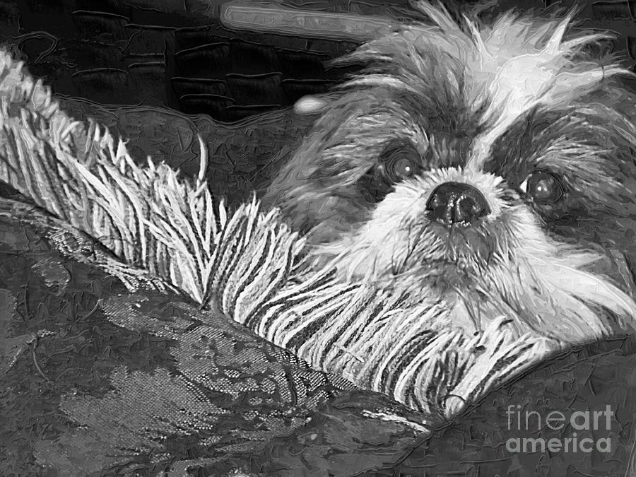 Shih Tzu Dog B&w Photograph - Mai-ling by Deborah MacQuarrie-Selib
