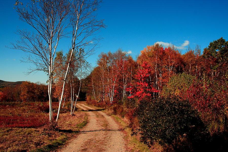 Fall Photograph - Maine Fall by Doug Mills