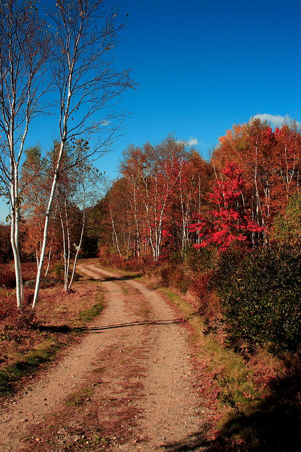 Fall Photograph - Maine October by Doug Mills