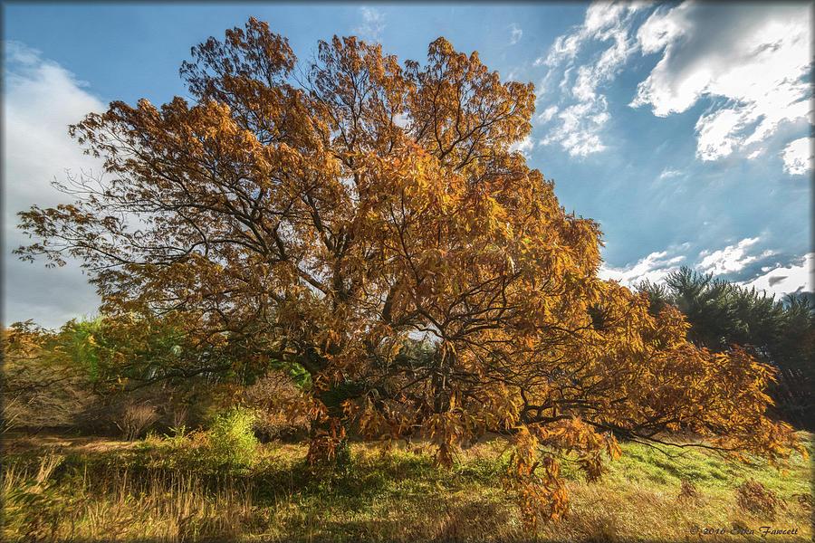 Tree Photograph - Majestic by Erika Fawcett