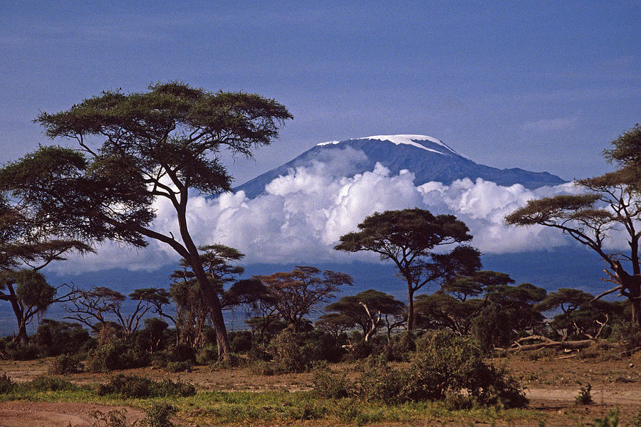 Africa Photograph - Majestic Mount Kilimanjaro by Michele Burgess