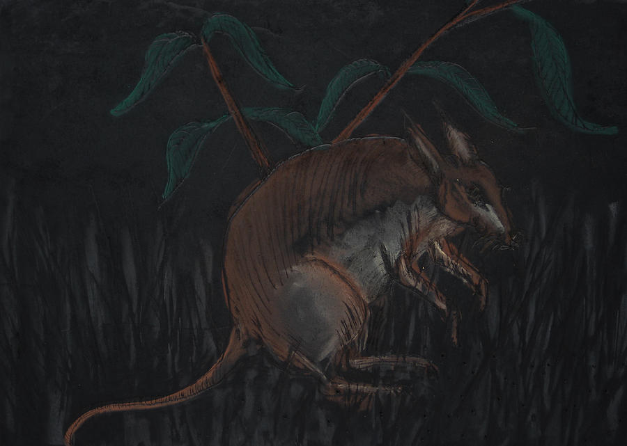 Artist Drawing - Malagasy Giant Jumping Rat by Darkest Artist