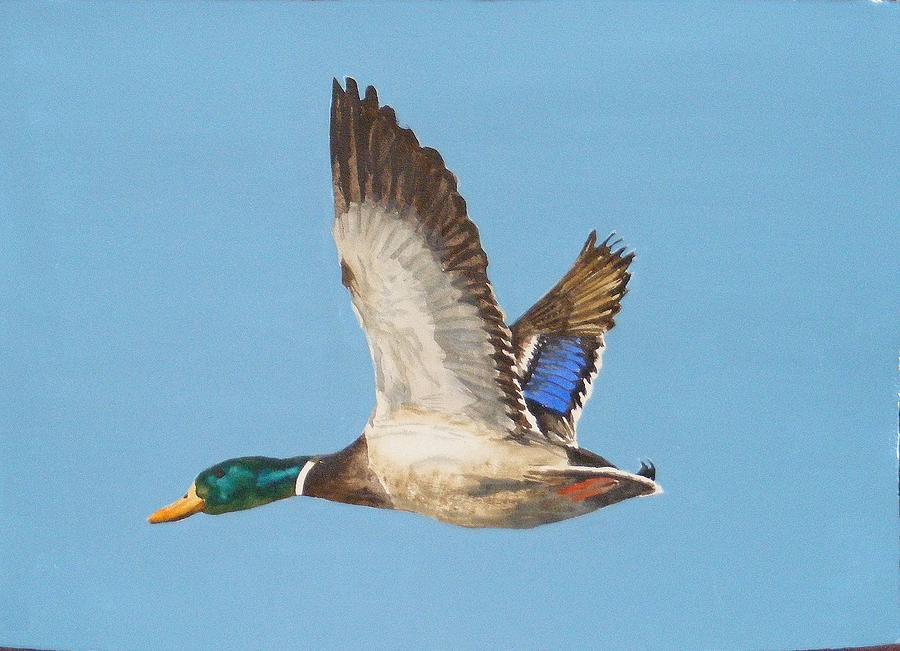 Duck Painting - Mallard Drake by Diane Ziemski
